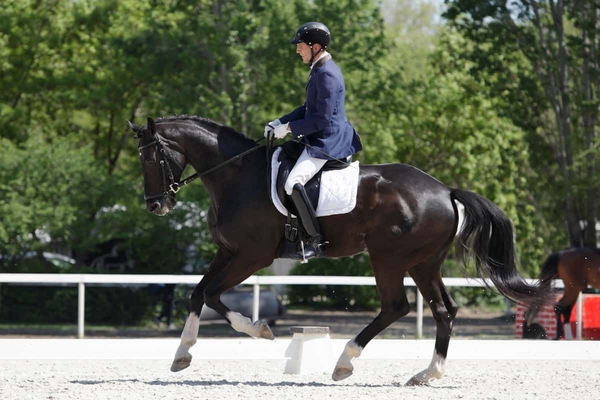 Man dressed up in riding gear for dressage event.